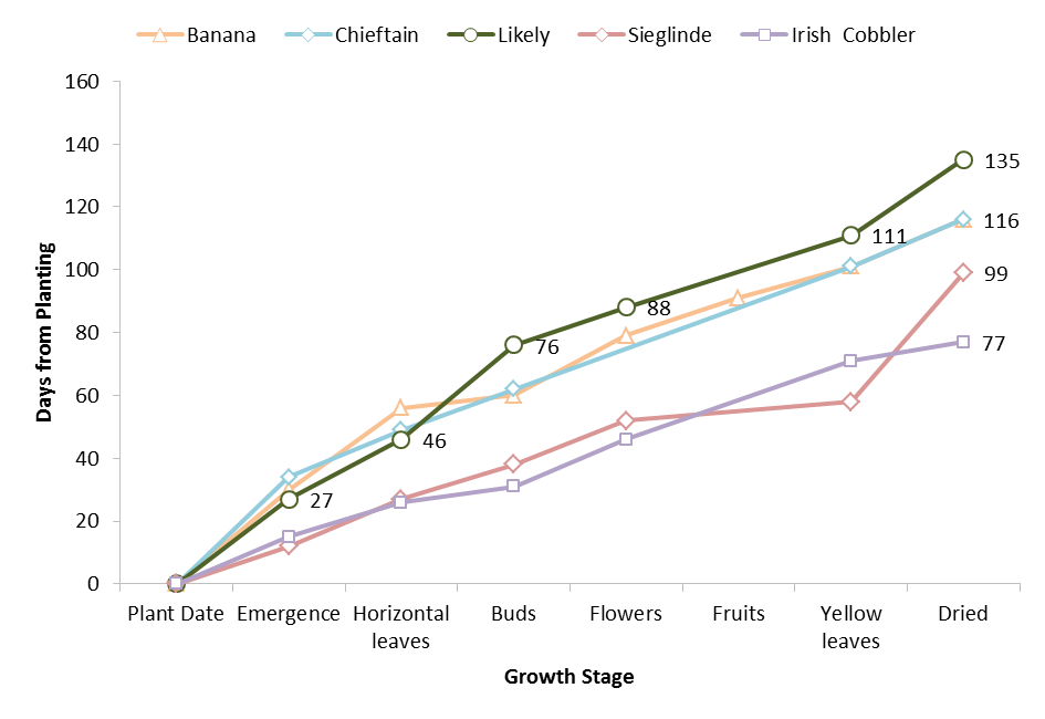 Growth and development of five varieties grown in Saanich, BC in 2013.