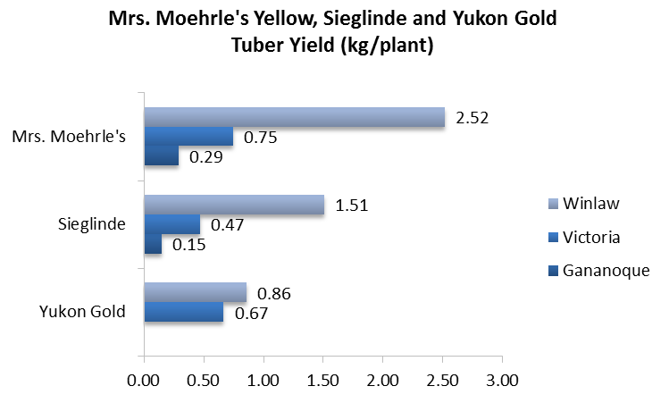 Moehrle, Sieglinde, Yukon Gold Yield