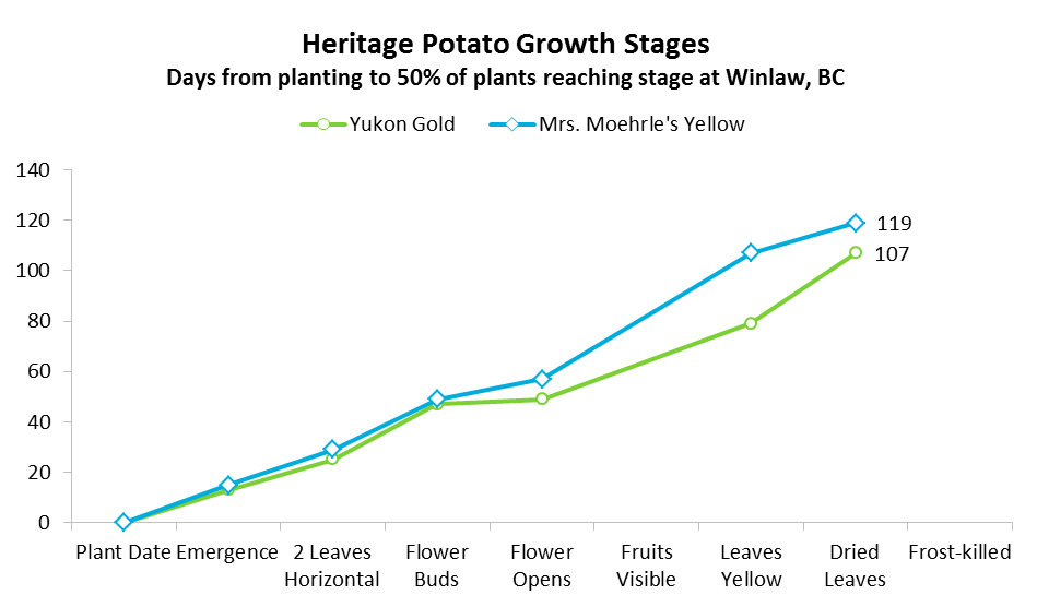 Moehrle, Yukon Gold Growth Stages