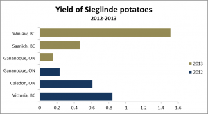 Yield of Sieglinde potatoes, Crop-Climate Project 2012 and 2013